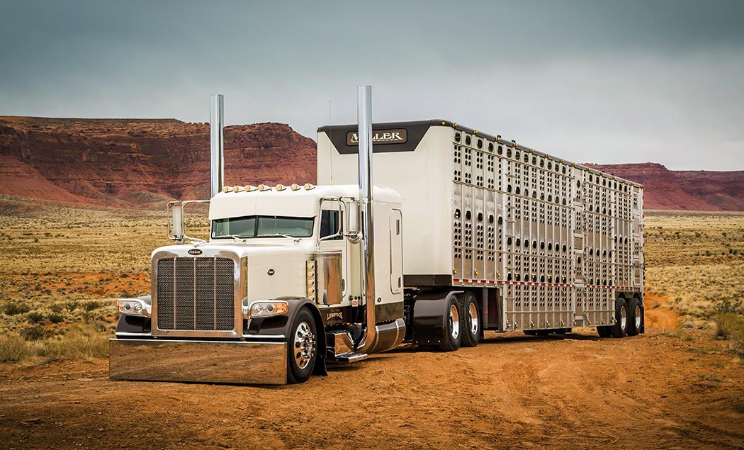384424518165123773 as well Chicken Lights N Chrome as well Js misc livestock01 additionally 27584616441956243 also CattleGuards. on custom semi cattle trucks
