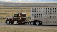 """""""I don't know if trucking is an addiction or just joyful stupidity!"""" – Darwin Hershberger To get ahead these days, you have to run hard. Livestock haulers, like young gun..."""